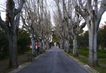 """Opinião: """"Oeiras é uma vila de emoções fortes"""""""