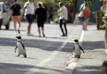 A nova série documental da Netflix é sobre pinguins hilariantes que vivem na cidade