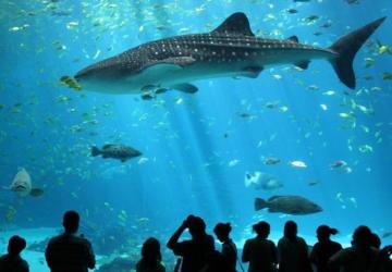 Visitar o Oceanário às terças-feiras passa a custar apenas 10€ para todas as idades